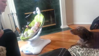 Dog extremely jealous of new baby - Video