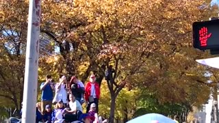 Chicago Cubs Fan Trust Fall During Parade - Video