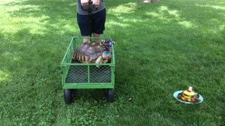 Bob the Tort in his Birthday Wagon  - Video