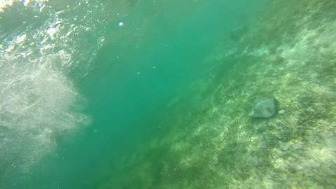 Scared by Stingray