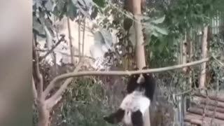 Aww 💗 Funny And Cute Panda Compilation 💗