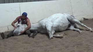 Racehorse Is Just A Big Puppy At Heart