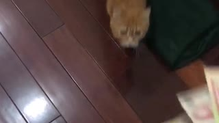 My Cat Likes To Eat Money  - Video