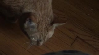 Cat attacks owner  - Video