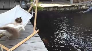 Cat Life in a Hammock - Video