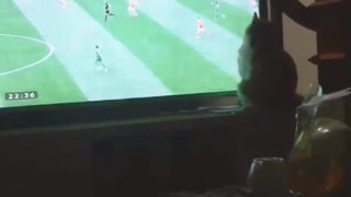 cat seen world cup  - Video