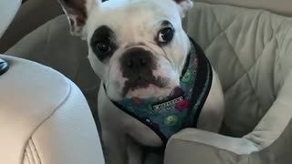 This Dog won't stop arguing with his Mom!