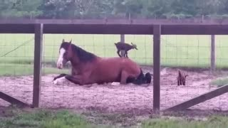 The Goat Sitter – He Just Happens To Be A Horse!!