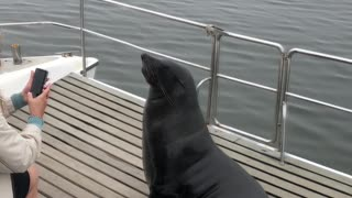 Seal Makes Himself Comfortable On a Boat in Namibia