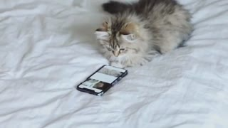 Funny cat play with cell phone and Facebook - Video