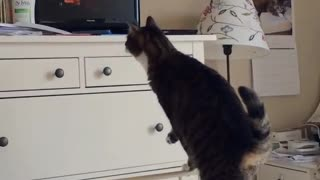 Collab copyright protection - black cat dresser jump fail - Video