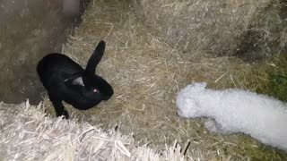 Adorable - small dog and Rabbit, first meet - Video