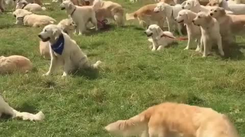 A group of dogs at the park for big celebrations