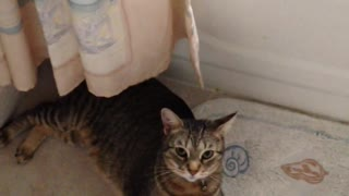 Cat Obeys Owner Command In Flipping Over