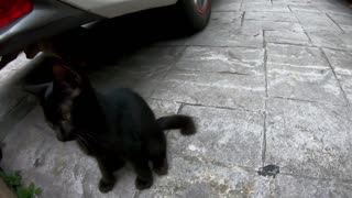 Naughty Stray Kitten Playing with my GoPro