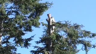Professional tree cut goes horribly wrong - Video