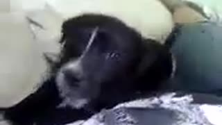 Puppy biting!  - Video