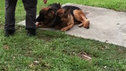 K9 Unit Dog Trainer Pats Down Potential Police Pups