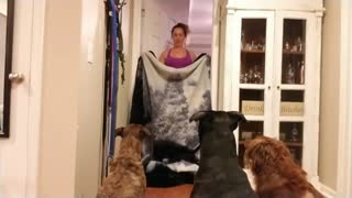 Trio of dogs participate in 'What The Fluff' challenge - Video