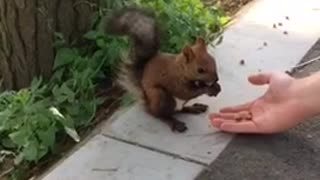 gullible squirrel