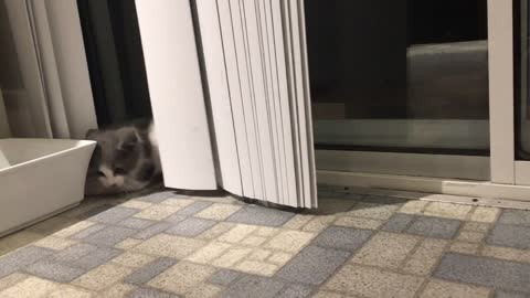 Kitten goes crazy for vertical blinds