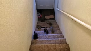 Kittens and stairs