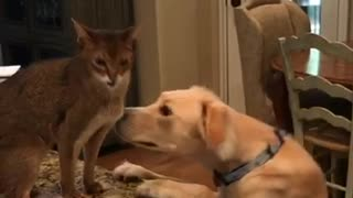 Cat scratching dog while dog sniffs cat