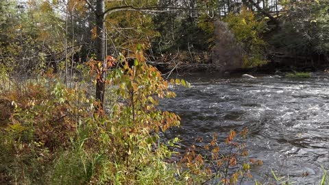 Wolf River Footage North of Menominee Indian Rez' Keshena Wisconsin