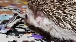 Hedgehog playing the puzzle game