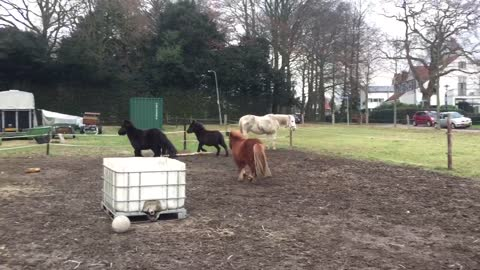 Playing 2 little pony's and 1 Mule foal
