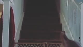 Slowmo grey pitbull runs down stairs and jumps over gate - Video