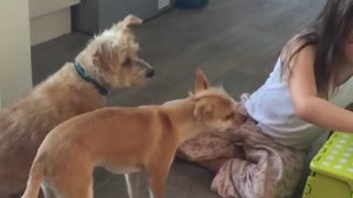 little girl dog training - Video