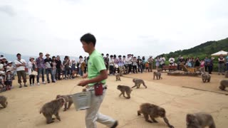Monkey park in Kyoto where you can feed 100 monkeys