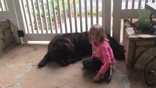 Dog not impressed with little girl's magic trick - Video
