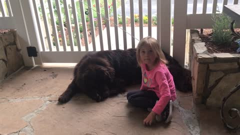 Dog not impressed with little girl's magic trick