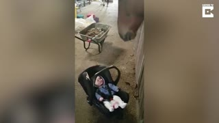 Horse Helps Soothe Adorable Baby By Rocking Her Carrier - Video