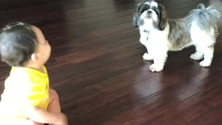 A baby boy and his dog friend  - Video