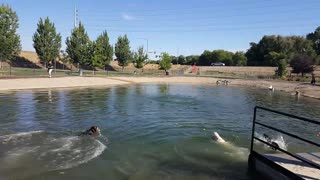 Grand opening of the Nampa dog park pond! - Video