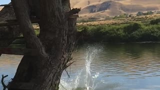 Girl front flips off tree branch into lake