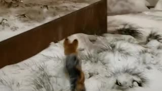 Small doggy hops like a rabbit through the deep snow