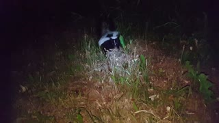 Skunk Acts Tough  - Video