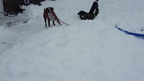 Dog Steals His Own Leash From Little Boy To Play In Snow