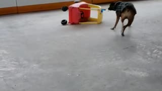 Dog Does Donuts with Toy Car