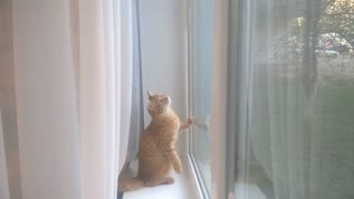 Cat and window