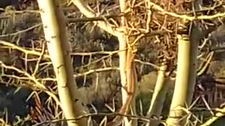 Snake Steals From Bird's Nest