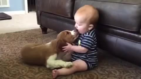 Baby Meets Puppy For The First Time !