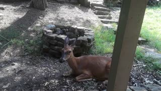 My pet deer Babe delivered a few days ago...where is it?