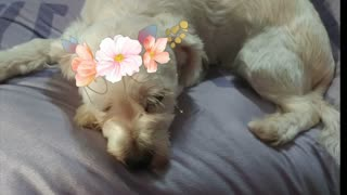 """Cute Dog Relaxing and Saying """"Hey"""""""