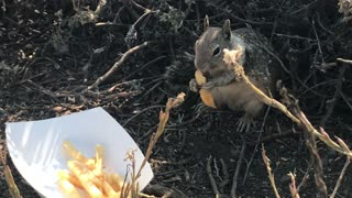 Squirrel Fry Feast