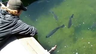 How to catch a fish while having fun - Video